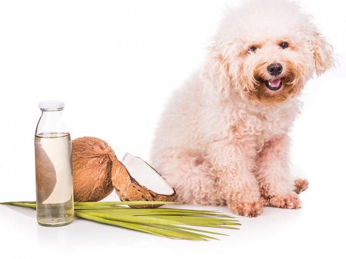 22-hunde-fellpflege-mit-kokosoel